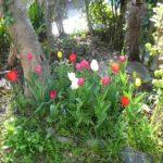 花々 お庭